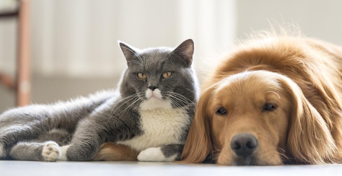 Aspirapolvere animali